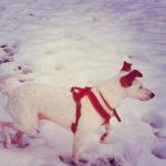 Snow Dog by onetenzeroseven