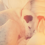 Morning Dog by onetenzeroseven
