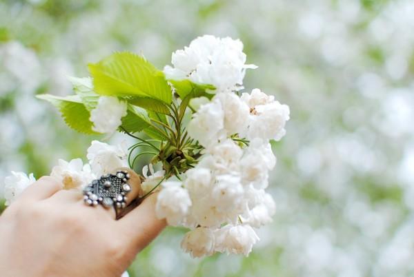 Blossom, Nature, Spring