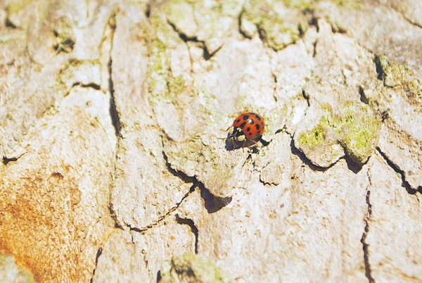 Ladybird, Nature, Tree