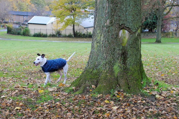 Quilted Jacket for Dogs