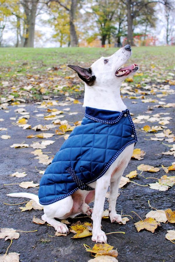 Good Quality Dog Coat