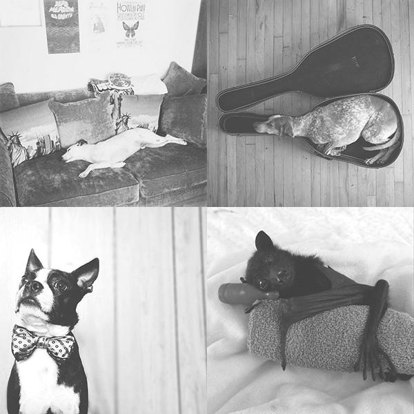 Best Pets on Instagram