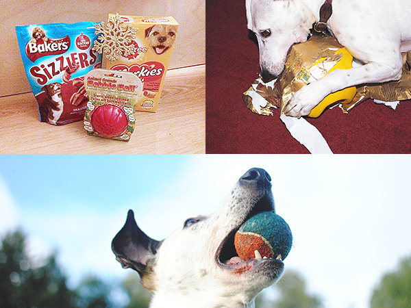 Last Minute Christmas Gifts Pets