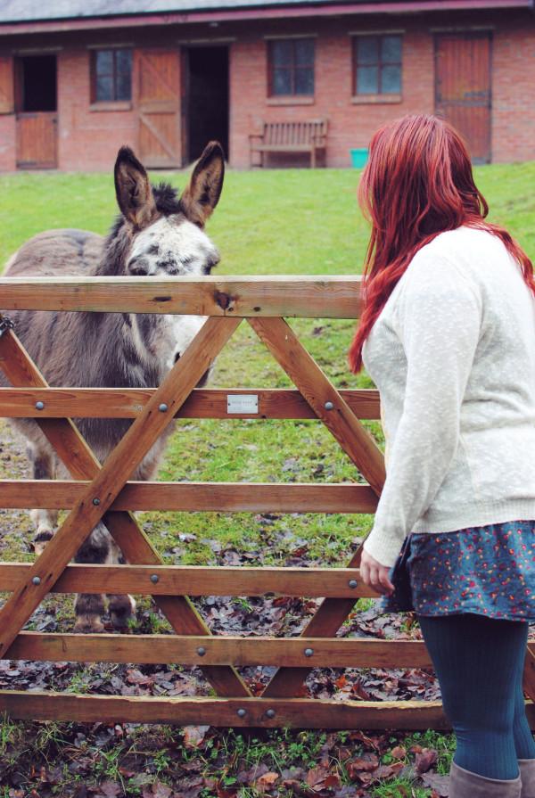 Donkey in Brampton