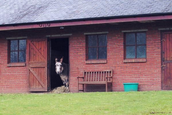 Cumbria Donkey